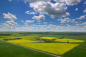 Yellow Canola field on prairie