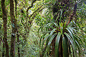 Epiphytes including Bromeliads growing in cloud forest canopy, Manu Biosphere Reserve, Amazonia, Peru.