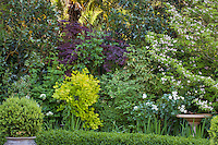 Shrub border foliage tapestry of colorful leaf textures in California backyard garden