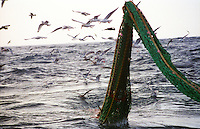 he F/V Windjammer dragging for gray cod in the Bering Sea