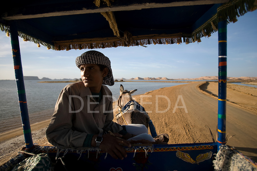 A local, young Siwan man dressed in traditional clothing with his donkey and cart near Lake Siwa and Siwa Town of the Siwa Oasis in Egypt.