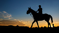 ARCADIA, CA - OCTOBER 06: Horses train at Keeneland Race Course on October 06, 2017 in Lexington, Kentucky. (Photo by Alex Evers/Eclipse Sportswire/Getty Images)