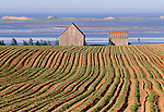 Late afternoon light distinguishes each furrow in this field, Prince Edward Island, Canada.