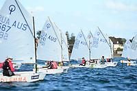 2013 Sail Melbourne - Optimist's