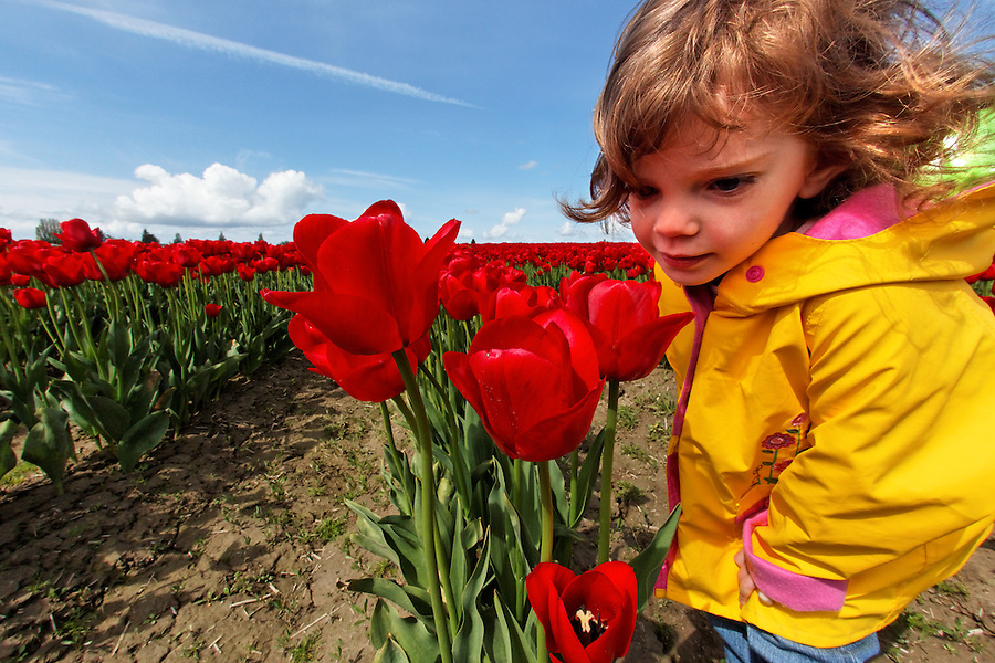 Girl standing in field of red tulips smelling flowers, Skagit Valley, Mount Vernon, Washington, USA