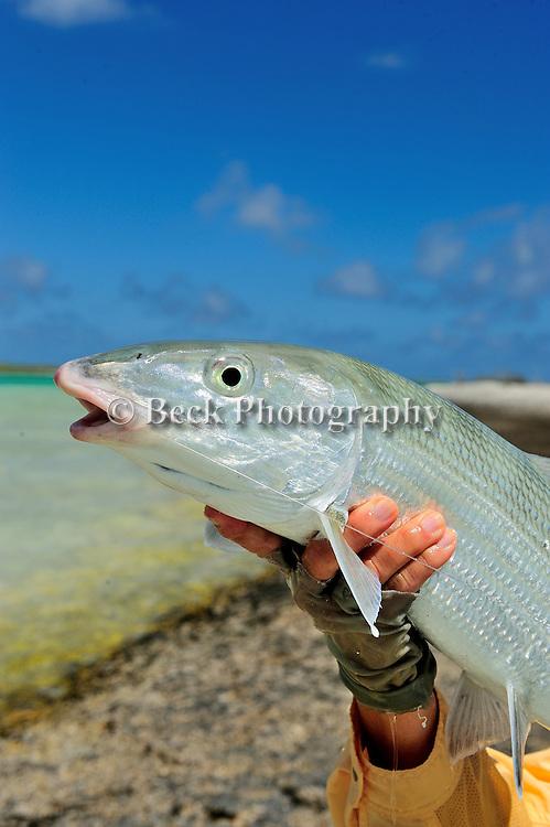Handheld Bonefish