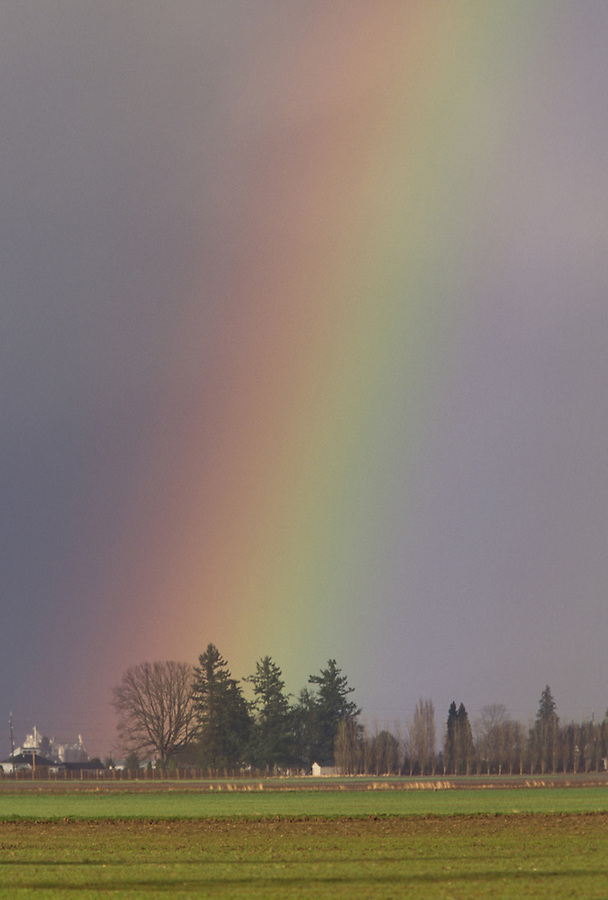 Rainbow over fields, Mount Vernon, Skagit Valley, Washington
