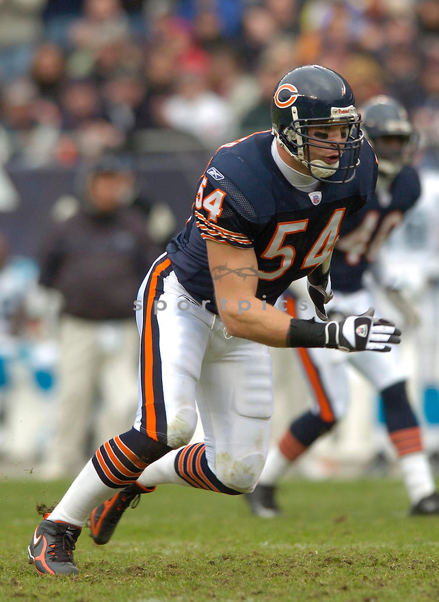 Brian Urlacher, of the Chicago Bears, in action during thier game against the Carolina Panthers on November 20, 2005...David Durochik / SportPics..Bears win 13-3