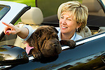Mature woman with dog in car, pointing