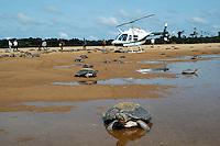 """Durante aÁ""""o da  FudaÁ""""o de Meio Ambiente CiÍncia e Tecnologia de Roraima - FEMACT, IBAMA e Policia Militar centenas de tartarugas que seriam comercializadas na cidade de Manaus por cerca de R$500,00 s""""o apreendidas de traficantes de animais silvestres e soltas baixo rio Branco no municÌpio de CaracaraÌ a 600 km de Boa Vista, capital de Roraima. <br /> CacaraÌ, Roraima, Brasil.<br /> 29/11/2005<br /> Foto de Jorge MacÍdo/Interfoto"""