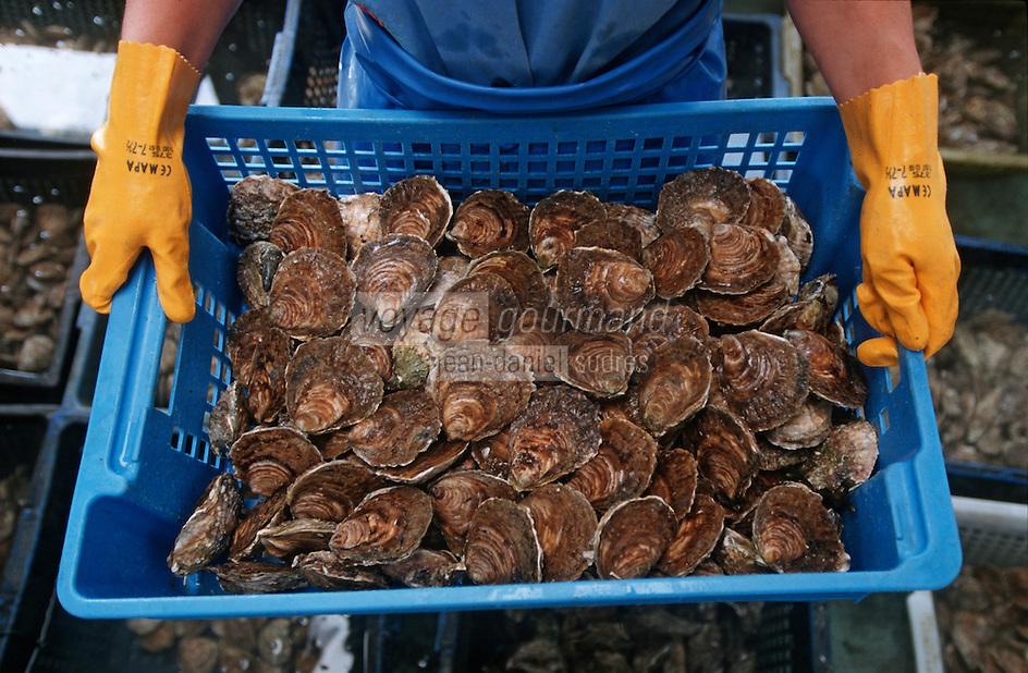 Europe/France/Bretagne/29/Finistère/Moelan sur Mer: Rivière de Merrien, Isabelle MORVAN ostreicultrice, huitre plate de Belon