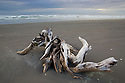 Large driftwood root on sandy beach south of Cape Foulwind, West Coast, South Island, New Zealand