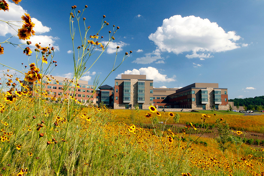 Wild flowers surround the new Martha Jefferson hospital located on pantops in Charlottesville, Va.  Photo/Andrew Shurtleff