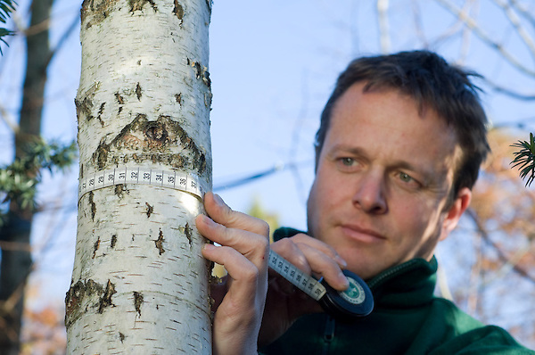 Paul Evans measuring the girth of a Birch Tree