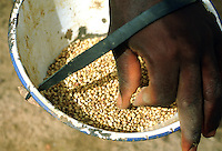Close up of container for millet seeds