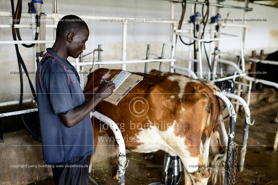 KENYA, County Bungoma, SANGÁLO Institute of Science and technology, dairy section, milking with machine / Milchviehhaltung, Molkerei, Melken mit Melkmaschine