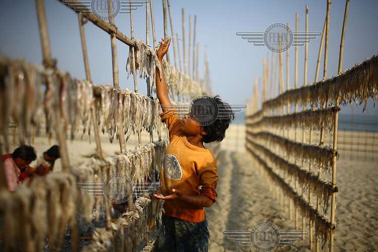 A child works at a dry fish plant on Sonadia island. Dried fish is a popular Bengali food, with 50,000 people employed in the industry in the coastal areas. Around 300 tonnes of dry fish is produced each season, which runs from November to April.