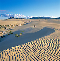 Spanien, Fuerteventura, bei Corralejo: Sandduenen | Spain, Fuerteventura, near Corralejo: dunes