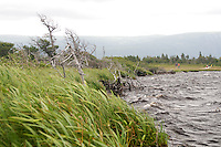 Wlaking through the bog on Western Brook Pond Trail, Gros Morne National Park Newfoundland and Labrador