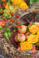 Homemade harvest basket made from found materials in the garden and woods, filled with of apples (Malus domestica) fruits, golden orange and pink roses (Rosa), yellow Heuchera foliage, flowers, red and green tomatoes vegetables, autumn picked fall crops. Northern Spy heirloom antique apple variety, Malus domestia 'Northern Spy'. The 'Northern Spy' apple, also called 'Spy' and 'King', is a cultivar of domesticated apple that originated in East Bloomfield, New York in about 1800.