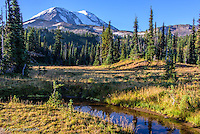 By 9 AM, the sun had reached Killen Meadows and covered it in a warm light. Mt Adams rose in the clear blue skys south of the Pacific Crest Trail.