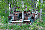 Aspen trees reclaim a bit of real estate, growing through the engine compartment of a 1953 Chevrolet Bel Air in east Idaho.