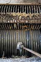 """France/DOM/Martinique/ Le François: Distillerie du Simon- Extraction du jus  par les moulins_Ce jus ou """"vesou"""" sera mis à fermenter- Prise d'un échantillon de jus"""