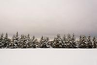 Winter Pines<br /> Mattituck, Long Island