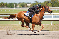 #103Fasig-Tipton Florida Sale,Under Tack Show. Palm Meadows Florida 03-23-2012 Arron Haggart/Eclipse Sportswire.