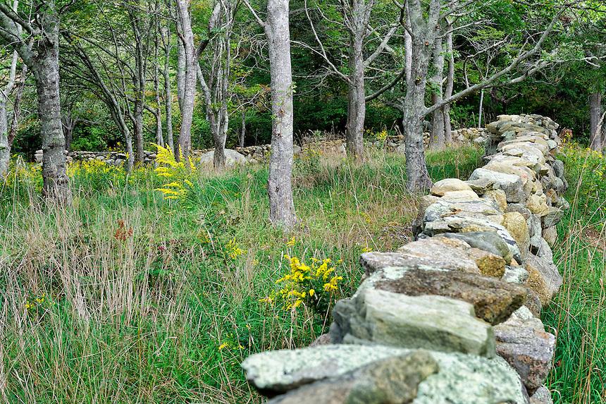 Field and stone fence, Chilmark, Martha's Vineyard, Massachusetts,, USA
