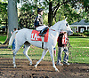 Litle Bit before The Arabian Claiming Crown at Delaware Park on 10/13/12