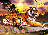 Interlitho, Lorenzo, REALISTIC ANIMALS, paintings, tiger, sunset(KL3759,#A#) realistische Tiere, realista, illustrations, pinturas ,puzzles