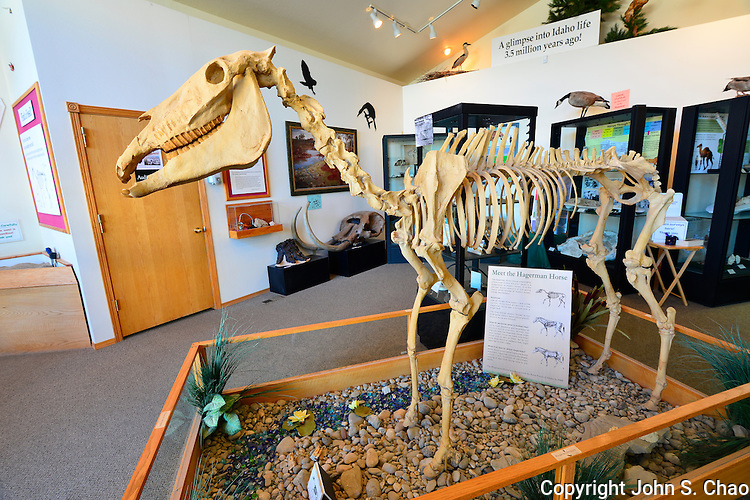 Hagerman Horse Fossil Skeleton exhibit in Visitor Center at Hagerman Fossil Beds National Monument, Hagerman, Idaho.