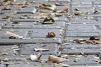 SÃO PAULO, SP, 20.04.2019: CLIMA-SP: Folhas secas na calçada, marcam o outono na região do Jardins, em São Paulo, neste sábado, 20. ( Foto: Charles Sholl/Brazil Photo Press/Folhapress)