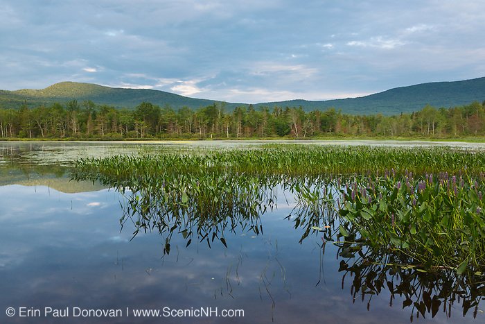 Elbow Pond in North Woodstock, New Hampshire on a cloudy summer day. Species of fish in this pond include chain pickerel, yellow perch and smallmouth bass. This area was part of the Gordon Pond Railroad, which was a logging railroad in operation from 1907-1916.