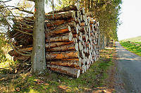 Petite coupe de bois sur le plateau de Millevaches placee en bord de chemin. Deux arbres soutiennent l'empilement...Small wood cut on the plate of Millevaches placee in edge of way. Two trees support stacking.