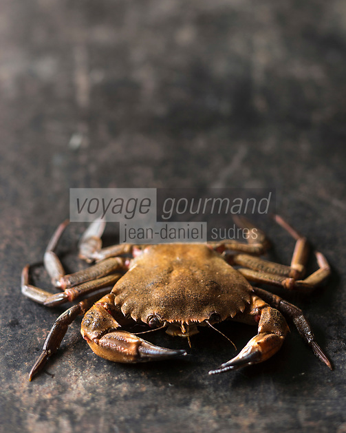 Gastronomie générale: Etrilles - Stylisme : Valérie LHOMME  // The velvet crab, alternatively velvet swimming crab, devil crab or lady crab, Necora puber, is a species of crab.