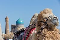A Taste of Portraits Uzbekistan by PMV