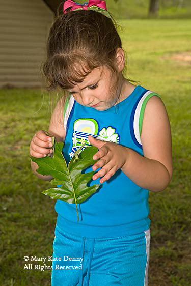 child examines leaf outdoors