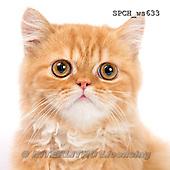 Xavier, ANIMALS, REALISTISCHE TIERE, ANIMALES REALISTICOS, FONDLESS, photos+++++,SPCHWS633,#A#