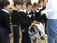 The Harker School - LS - Lower School - Grade 1 students helped raise money and collect donations for the Humane Society of Silicon Valley as part of their Community Service Project - Photo by Cindy Proctor