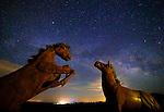 Ricardo Breceda's Horses,<br /> Borrego Springs, CA