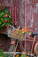 63821-22214 Old bicycle with flower basket next to old outhouse garden shed.  Red Wing Begonias, Zinnias, Snapdragons  (Antirrhinum sp.)  Marion Co., IL
