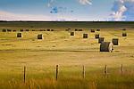 A hay field at sunset along the Skalkaho Highway near Phillipsburg, Montana