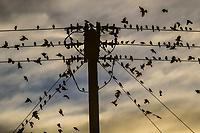 Aves Tastiota