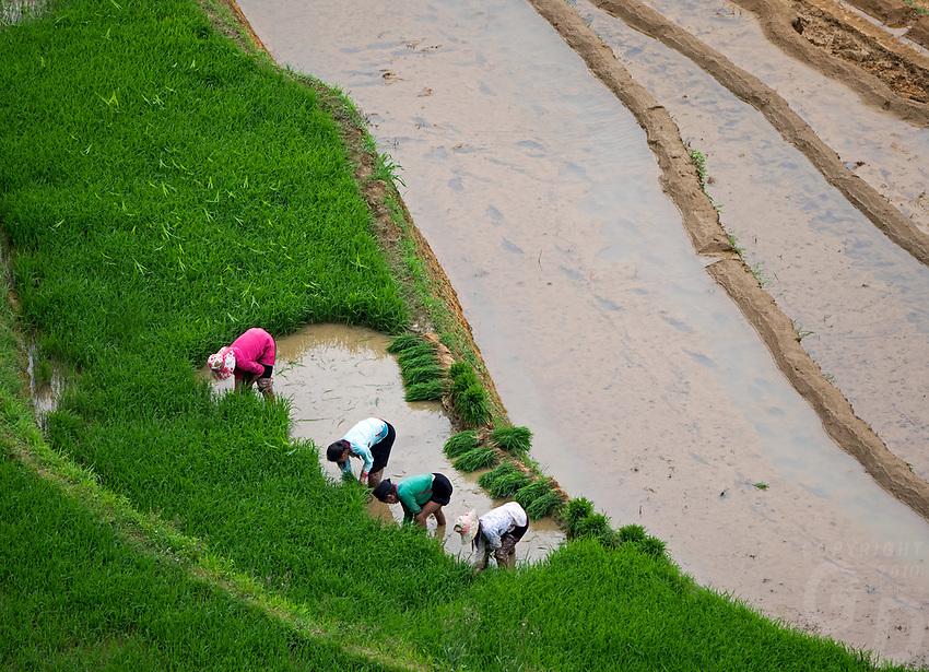 Sapa Rice Terraces, NorthVietnam