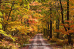 Autumn Forest Road,  Lycoming County, Pennsylvania