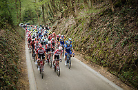 Team Lotto-Soudal in front up the Hagaard climb<br /> <br /> 59th De Brabantse Pijl - La Flèche Brabançonne 2019 (1.HC)<br /> One day race from Leuven to Overijse (BEL/196km)<br /> <br /> ©kramon