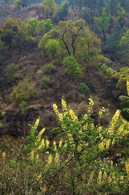 Trongsa to Thimphu, Bhutan.Valleys, flowers  and  Vegetation along the road.
