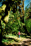 WA: Washington State; Olympic National Park, Hoh Rain Forest, epiphytes  .Photo Copyright: Lee Foster, lee@fostertravel.com, www.fostertravel.com, (510) 549-2202.Image: waolym202